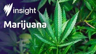 Download Is medicinal marijuana doing good or harm? Video