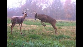 Download Deer attacks and boy takes him out. Video