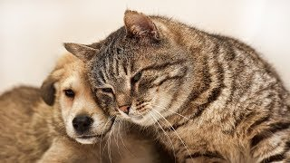 Download Cats Meeting Puppies for the First Time Compilation 2016 Video