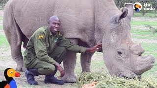Download Last Male Northern White Rhino On Earth Has The BEST Caretaker | The Dodo Video