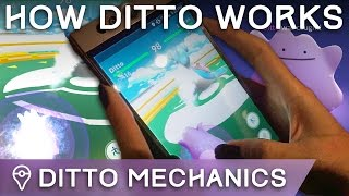 Download FINALLY CAUGHT DITTO /// HOW TO BATTLE WITH DITTO /// HOW DITTO WORKS IN POKÉMON GO Video