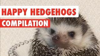Download Happy Hedgehogs Cute Pet Video Compilation 2017 Video