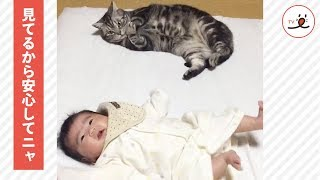 Download いつも赤ちゃんの近くで様子を見守る猫さん😺【PECO TV】 Video