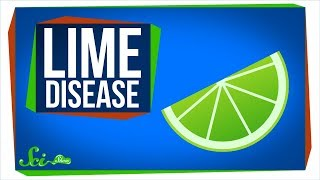 Download Lime Disease: How a Fruity Drink Can Give You a Rash Video