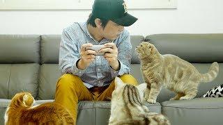 Download 집사가 핸드폰하면 고양이들의 귀여운 반응들 Video