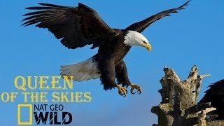 Download Eagle Documentary National Geographic Full QUEEN OF THE SKIES Video