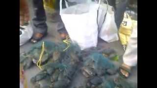 Download bhayander fish market Video