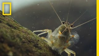 Download Thanks to Shrimp, These Waters Stay Fresh and Clean | Short Film Showcase Video