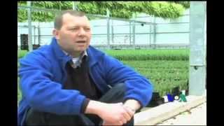 Download Nhà kính trồng hoa Tulip tại Virginia Hoa Kỳ Video