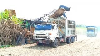 Download รถตัดอ้อย!! Sugar Cane Harvester, ตัดอ้อยใส่รถบรรทุก Video