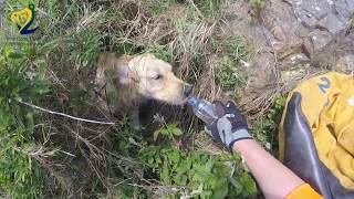 Download Dog Cliff Rescue - Irish Coast Guard Howth Unit Video