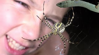 Download 4K Creatures Of The Night: Huge Spiders & Night Lizards. Fun Travel Herping Fishing. Video