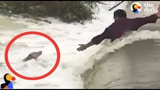 Download DROWNING Dog Rescued by AWESOME Men | The Dodo Video
