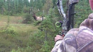 Download The best archery shots on video, bowhunting - StuckNtheRut Video
