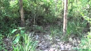 Download FRANK CUESTA - Vibora Russel enorme serpiente con veneno hemotóxico (Natural Frank) Video