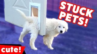 Download Funniest Pets Stuck In Stuff Home Videos of 2016 Weekly Compilation | Kyoot Animals Video