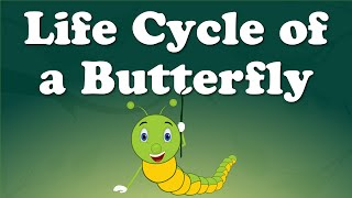 Download Life Cycle of a Butterfly Video