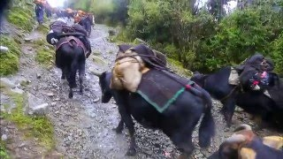 Download Bhutan, In Search of a Celestial Kingdom Part 1.Road to Merak, an Unchartered Land Video