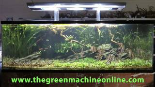 Download Altum Angel Aquascape, The Green Machine by Andrew Mack Video