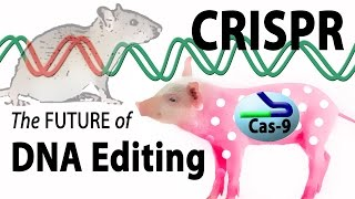 Download What is CRISPR? Animation. Video