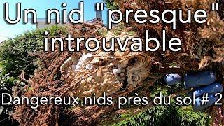 Download Un nid ″presque″ introuvable - Dangereux nids près du sol # 2 Video