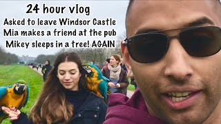 Download A Parrot Day Out Turns Into A Crazy Adventure With Mikey And Mia Video