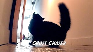 Download Cat Jobs Video