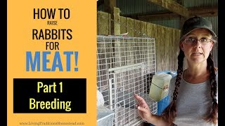 Download How to Raise Rabbits for Meat: Part 1 Breeding Video