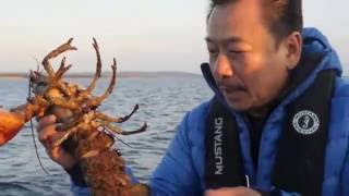 Download MC VIET THAO- CATCHING and PROTECTING LOBSTER in CANADA. Video