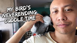 Download My Bird's Never-ending Cuddle Time | Vlog #283 Video