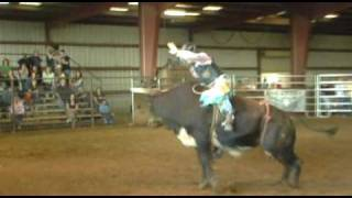 Download WRBRA: Can YOU ride the bull?″ mutton, calf steer bull riding Video