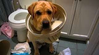Download Funny Pets 🐶😂 Guilty Dogs Epic Reaction (Part 2) [Funny Pets] Video