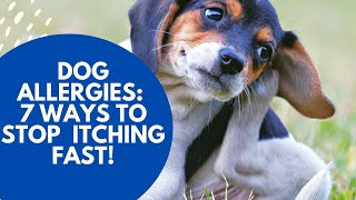 Download Dog Allergies: 7 Ways To Stop The Itching Fast Video