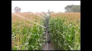 Download Maize Clip ExpoAgro 1 Video