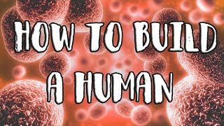 Download How to Build a Human Video