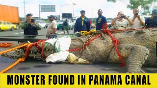 Download MONSTER FROM PANAMA CANAL EXPLAINED Video