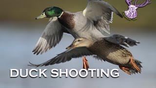 Download DUCK SHOOTING Video