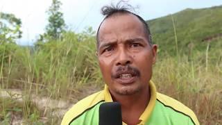 Download PEMIKAT BURUNG PUNAI Video