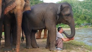 Download The Elephant Whisperer - Man and Elephant are Best Friends Video