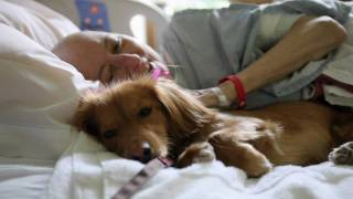 Download ″Pawsitive Pals″ San Diego Hospice Pet Therapy Program Video