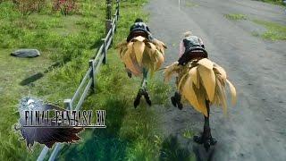 Download Final Fantasy XV - Chocobo Race Gameplay @ 1080p HD ✔ Video