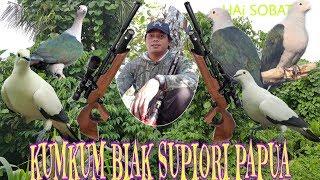 Download Berburu kumkum ternyata burung nuri banyak.supiori papua Video