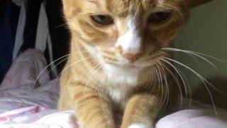 Download 고양이에게 새해 선물을 받았.... Video