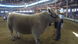 Download 4-h Grand Champion Steer | Iowa State Fair 2014 Video
