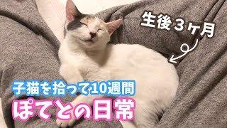 Download 子猫を拾って10週間・ぽてとの日常 Video