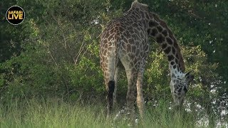 Download safariLIVE - Sunrise Safari - March 22, 2019 Video