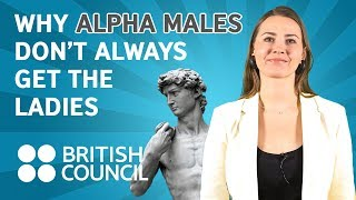 Download Why alpha males don't always get the ladies Video