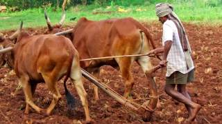 Ethiopian: Addiss Tikusat    Free Download Video MP4 3GP M4A - TubeID Co