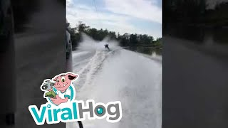Download Flying Bull Shark Nearly Hits Barefoot Skier || ViralHog Video
