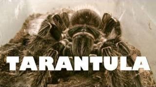 Download NATURE | Tarantula | New Mexico PBS Video